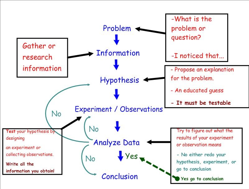 Scientific method homework helps Will someone do a research – The Scientific Method Worksheet